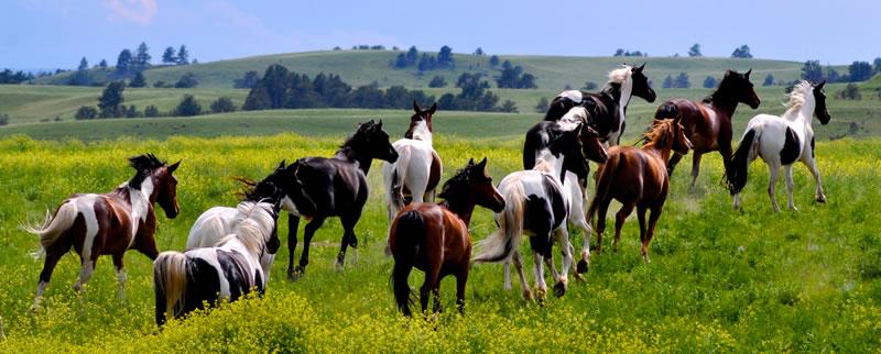 Wild-Horse-Sanctuary