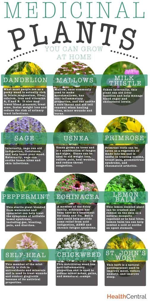 Medicinal Plants Coloring Dover Nature Ilil Arbel 0800759274628 S