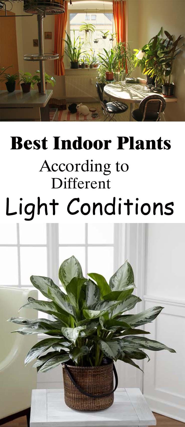 choosing indoor plants