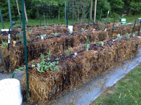 Joel Karsten's system for automatic watering of straw bale gardens