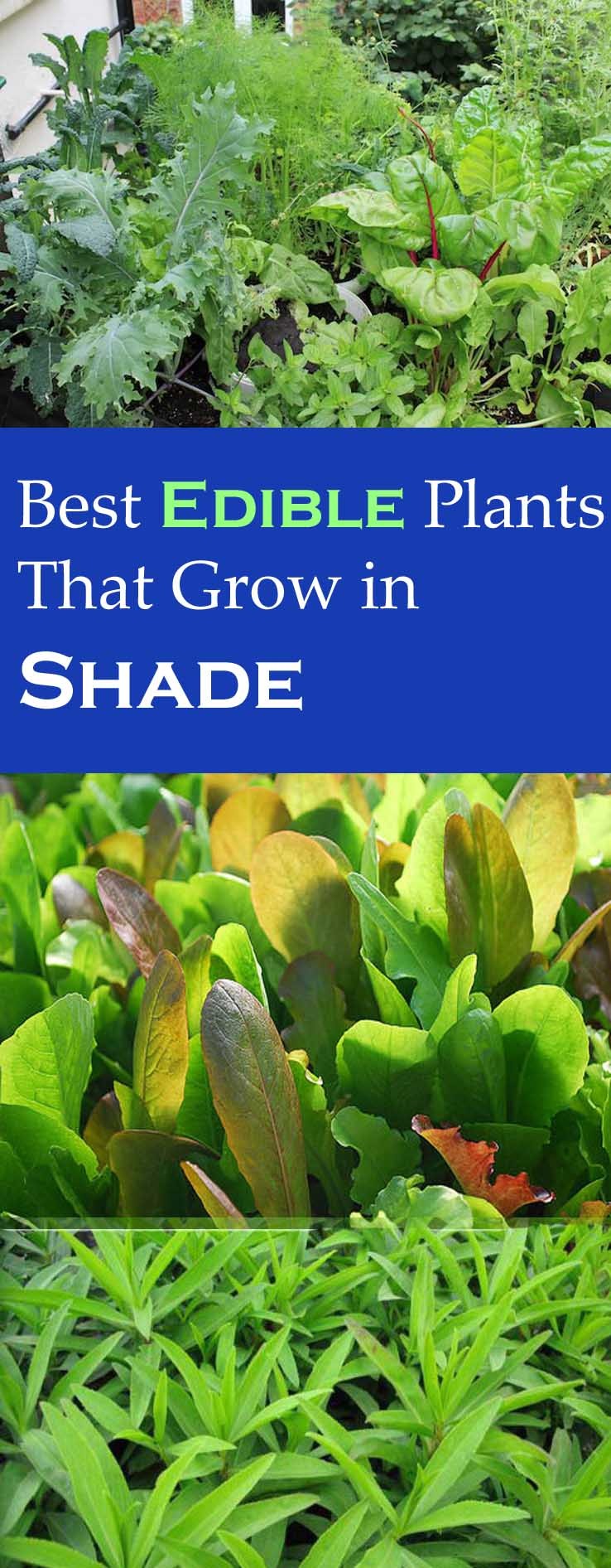 edible plants for shade