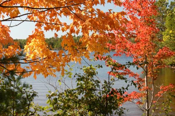 fall colors elbow lake lodge