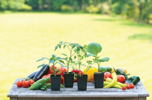 garden ready veg