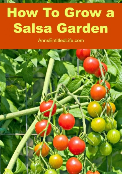 how-to-grow-a-salsa-garden