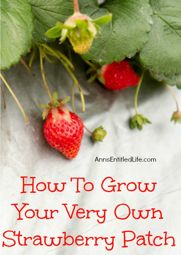 how-to-grow-your-very-own-strawberry-patch
