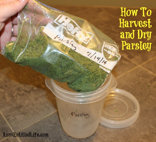 how-to-harvest-and-dry-parsley-14