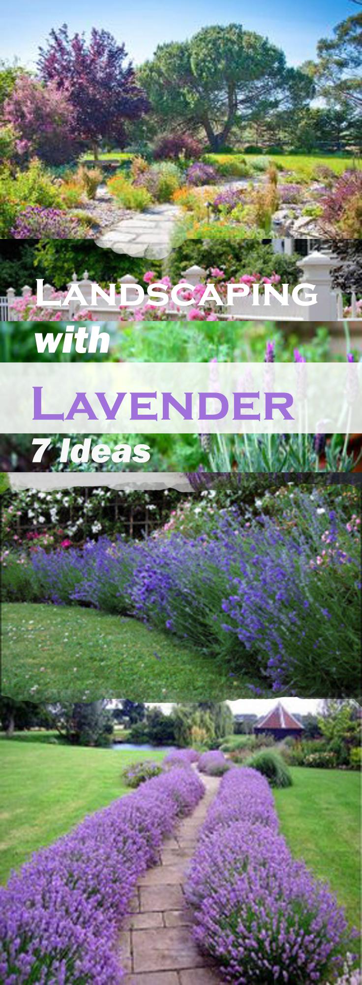 lavender balconygardenweb.com