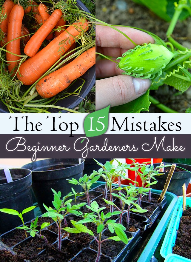 mistakes-of-new-gardeners