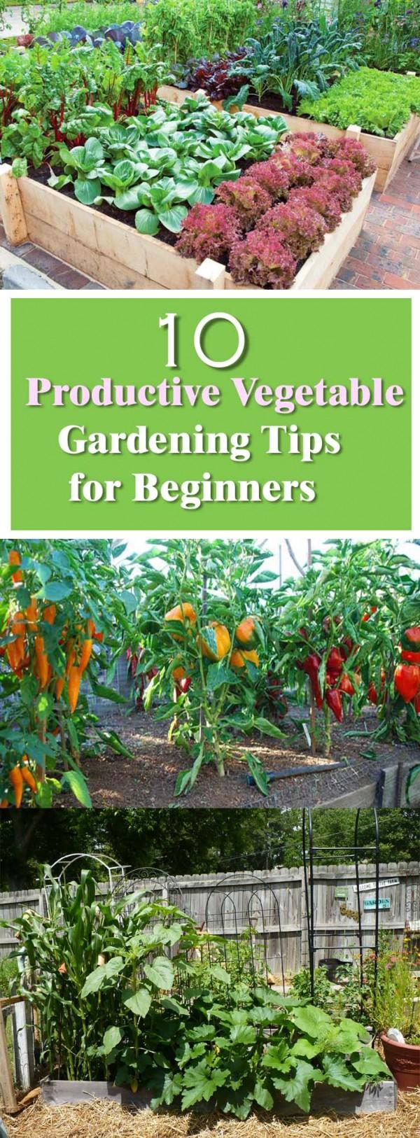10 Productive Vegetable Gardening Tips for Beginners Dan330