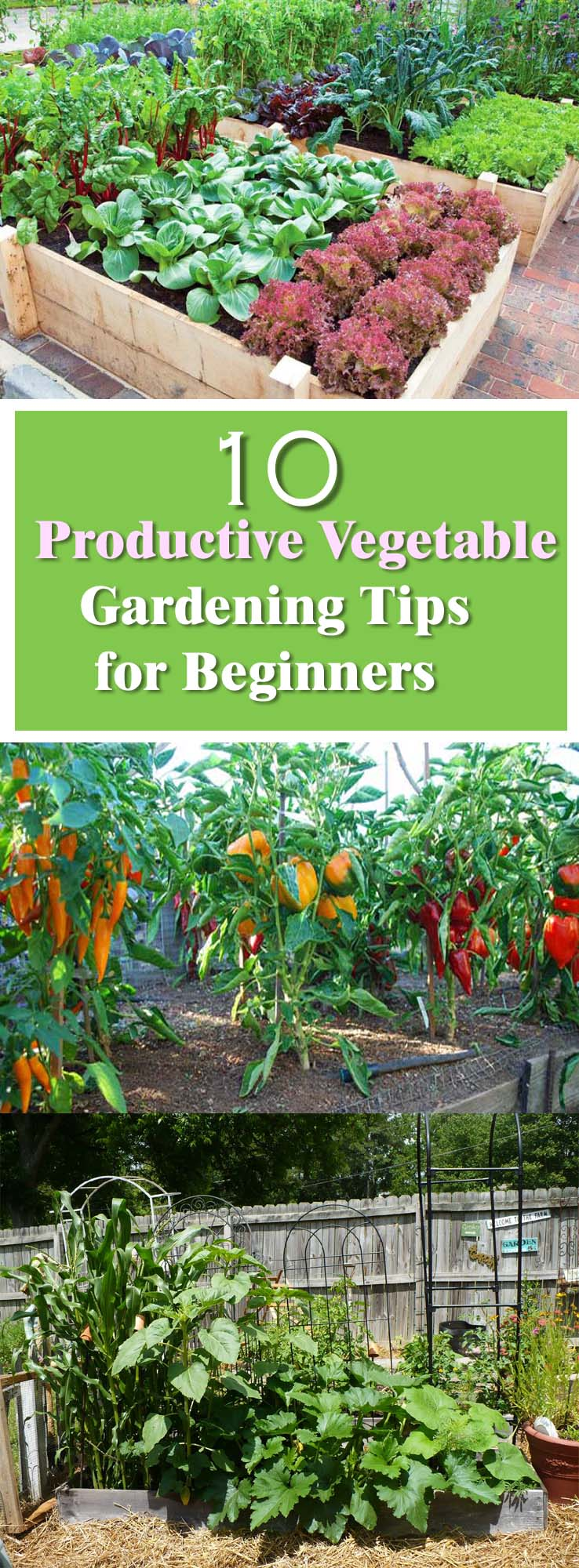 productive vegetable gardening tips