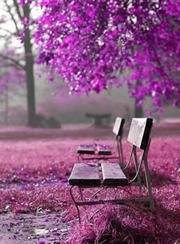 radiant orchid bench from pinterest