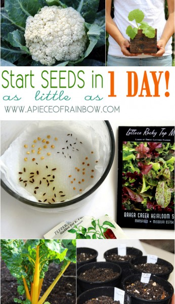 seed-starting-tips-apieceofrainbowblog-111