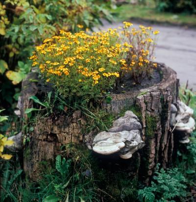 stump-planter-400x411