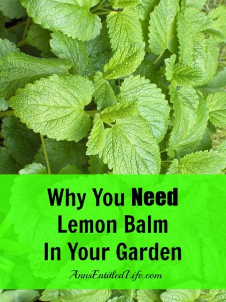 why-you-need-lemon-balm-in-your-garden