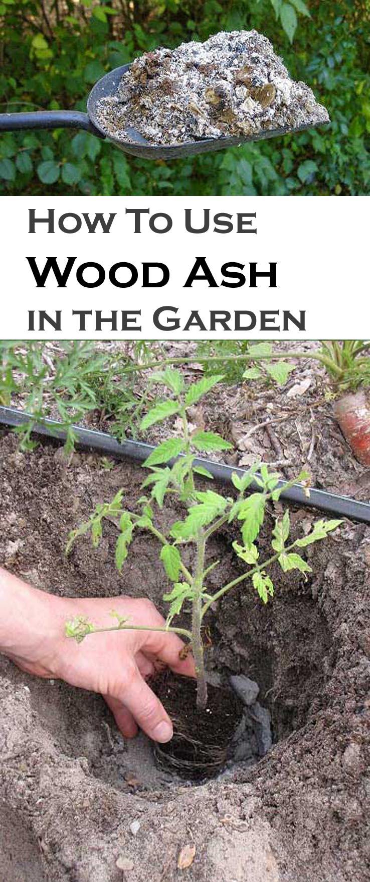 wood ash in the garden