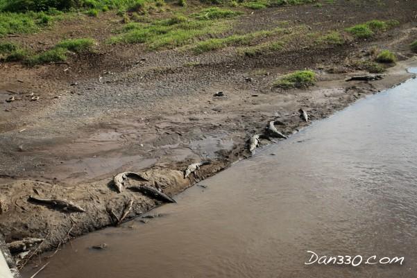 costa rican crocodiles