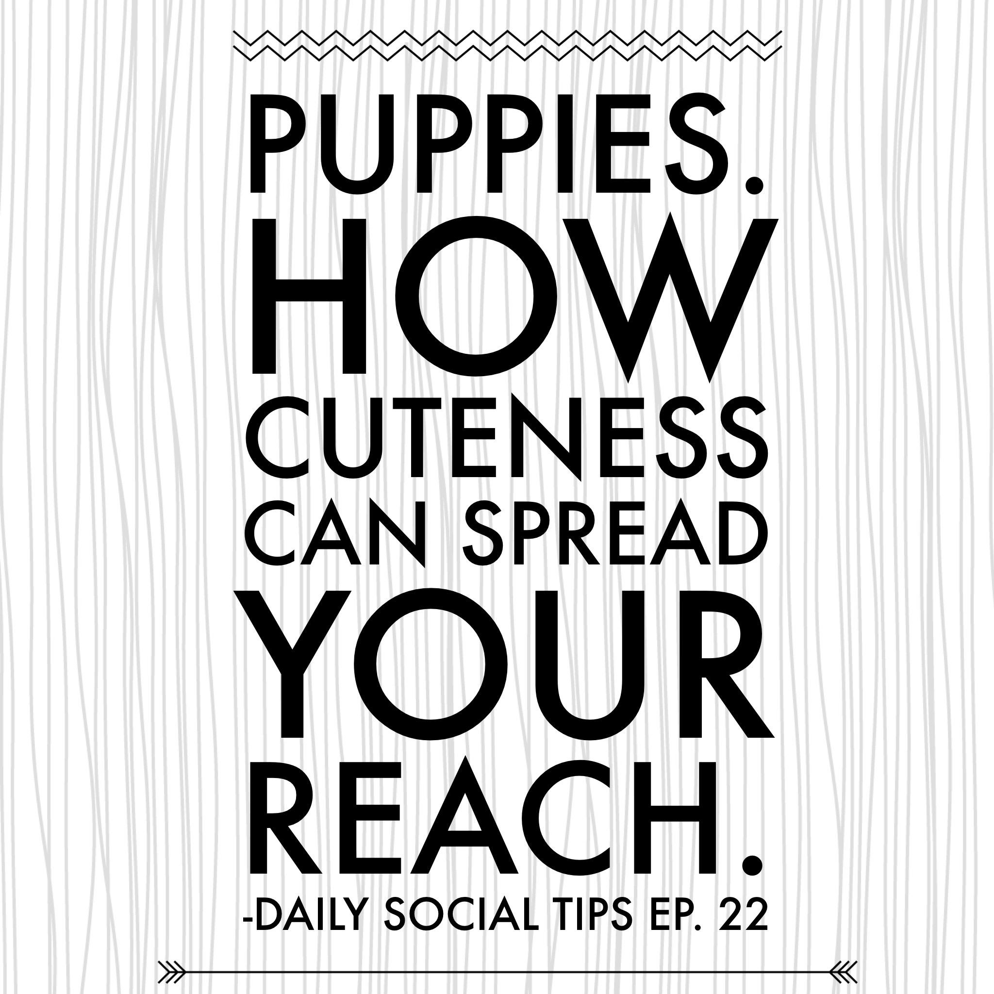 cute puppies social reach