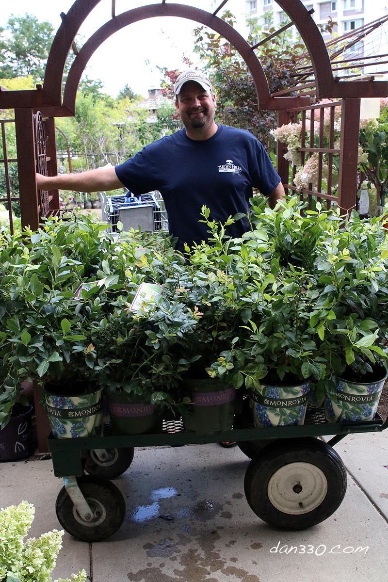 Buying Blueberry Plants